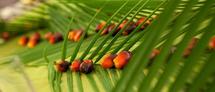 Palm Oil Industry in Indonesia - CPO Production & Export