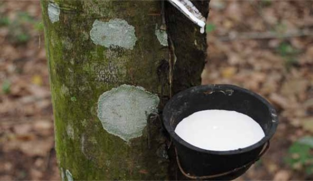 Rubber Industry Indonesia Challenges And Opportunities