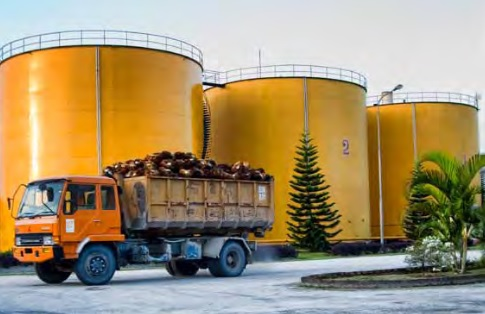 Palm Oil Industry in Indonesia: Update on CPO Production & Export