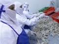 Minister Susi Pudjiastuti on Illegal Fishing in Indonesia